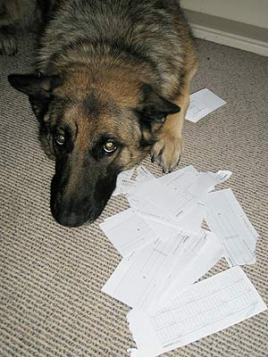 Asha balances the cheque book.
