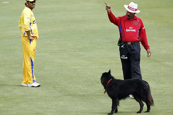 Umpire Krishna Hariharan orders a dog that disrupted play off the pitch in the opening game of the 2009 IPL Twenty20 cricket match between the Mumbai Indians and Chennai Super Kings in Cape Town.