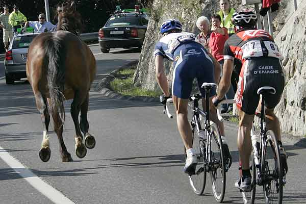 A horse runs in fron of Caisse d'Epargne's team rider David Garcia Lopez (right) of Spain and Volksbank's team rider Gerrit Glomser of Austria during the sixth stage of the Tour de Suisse cycling race in Crans-Montana.