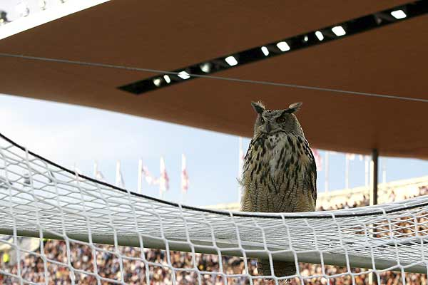 An owl interrupts the Euro 2008 Group A qualifying football match between Finland and Belgium, in Helsinki.