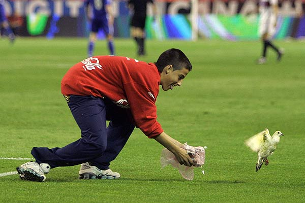 A boy tries to catch a bird on the field during Sevilla's UEFA Cup semifinal second leg football match against Schalke 04 at Ramon Sanchez-Pizjuan stadium in Seville, Spain.