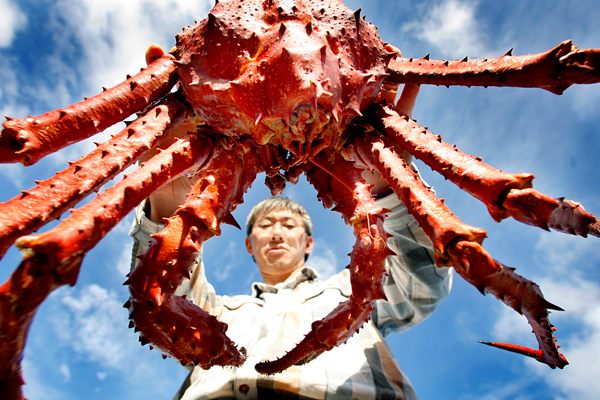 King Crabs Biggest King Crab in The World