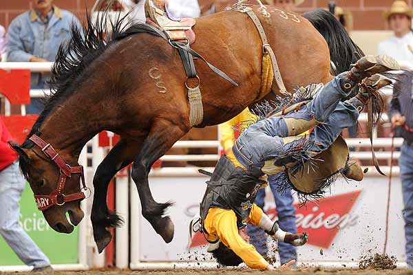 Geordie Murray of Calgary gets bucked off his horse Stealth Rocket in the Novice Bareback event during the rodeo at the Calgary Stampede in Calgary, Alberta.