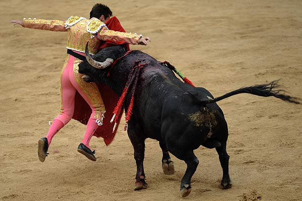 Spanish bullfighter Francisco Marco is tossed by a bull, almost severing his ear, during the second bullfight of the San Fermin festival in Pamplona.
