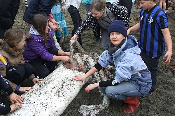 Te Papa educator Emma Best and interested children check out the massive squid which was washed up on the Wellington coastline.