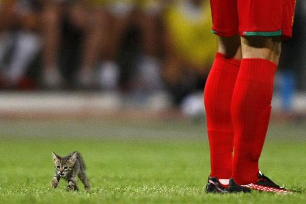 A kitten strays onto the pitch during the Super Cup final between Birkirkara and Valletta at Ta' Qali National Stadium outside Valletta.