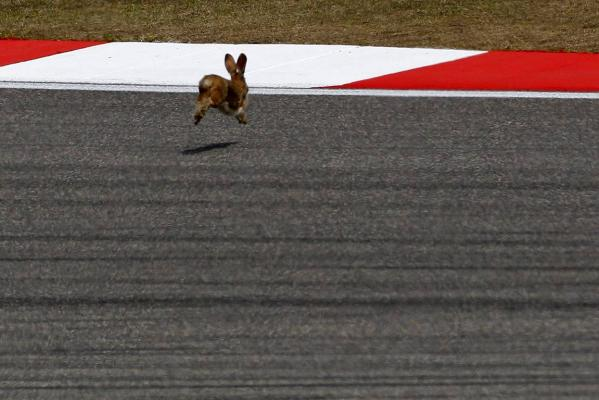 A rabbit runs on the track during a practice session of the Chinese F1 Grand Prix at Shanghai International Circuit.