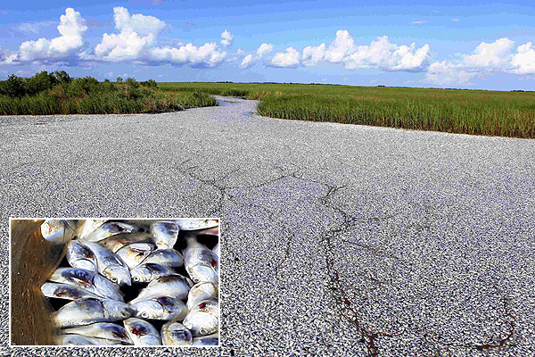 Massive fish kill unrelated to BP spill, authorities say
