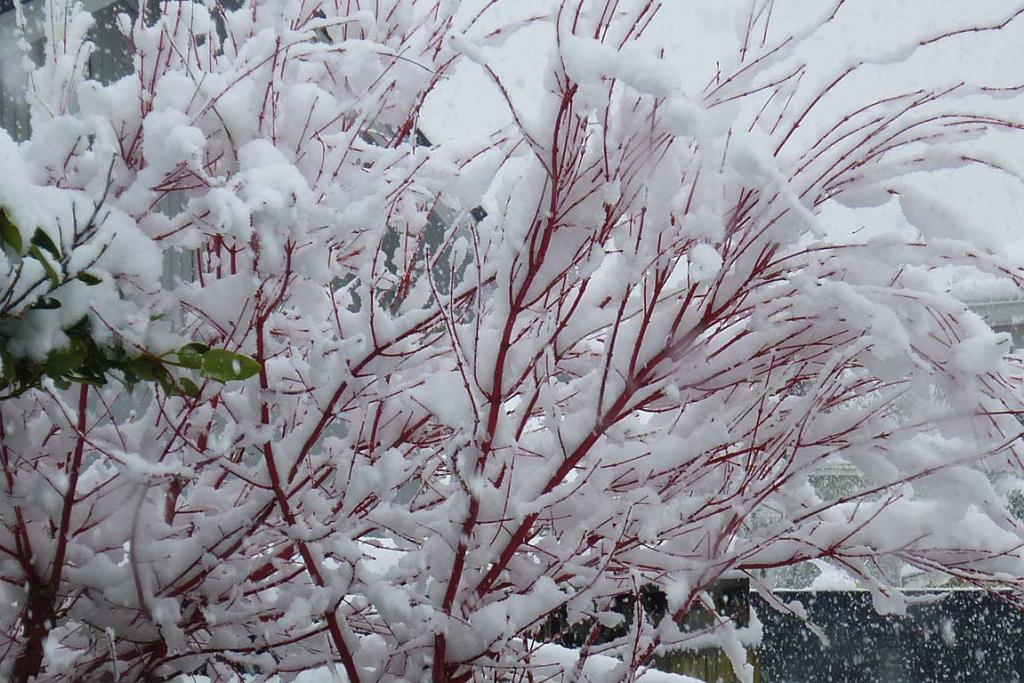 Heavy snow in Southland
