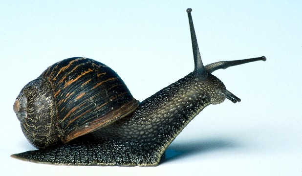 SURPRISE TO SOME: Weird animal news from the year includes the fact that several people in Miami got sick after consuming mucous from a giant snail in a religious ceremony.