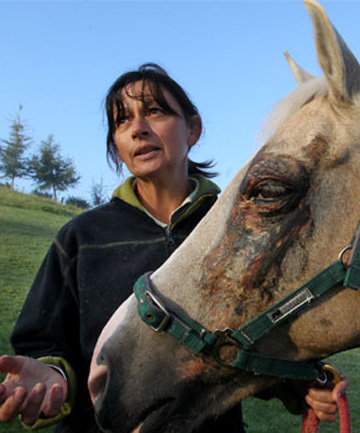 BATTLE-SCARRED: Kathryn Corry and her palomino, Squirt. The horse suffered severe facial injuries after being smeared with creosote at an equestrian event in Hawera last weekend. Police are investigating.