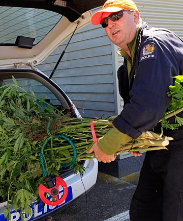 Detective John Nicholls, of Motueka, loads bundles of cannabis plants seized during the national Operation Linda