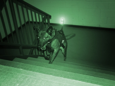 Night vision dog