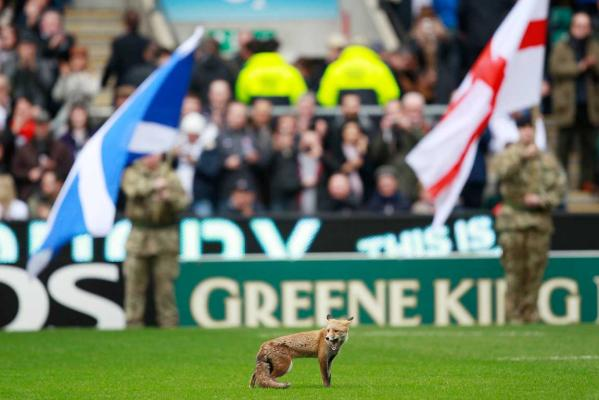 Animals on the pitch gallery