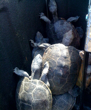 JFK turtles