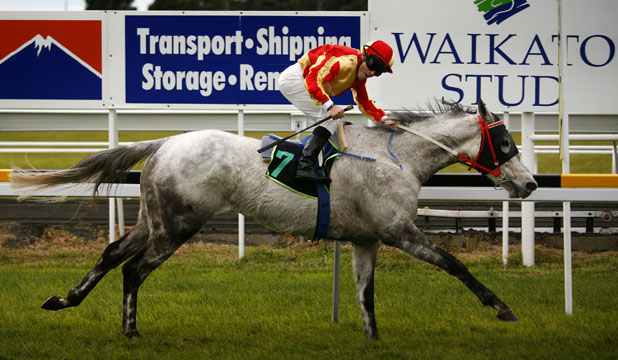 Almighty fine win for grey outsider