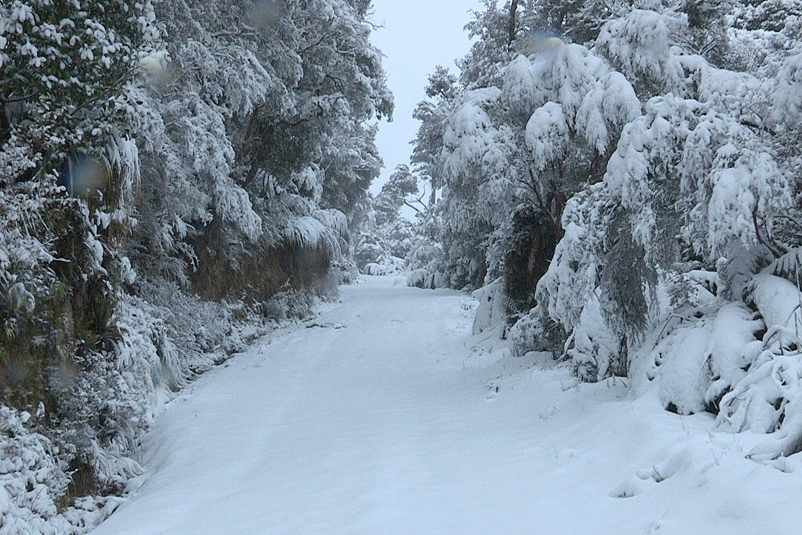 Snow covers a track near the Wainuiomata water catchment area, Wellington.