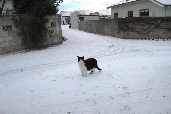 Reuben the cat checking out the snow in Alexandra.