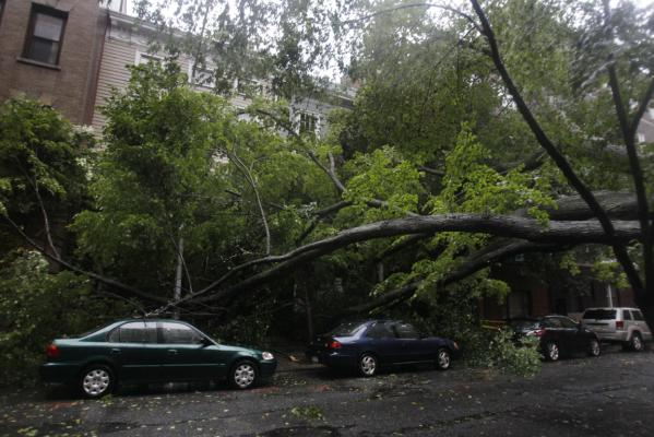 A large, fallen tree blocks a road while it rest on some cars in the Brooklyn borough of New York as Hurricane Irene hits the city.