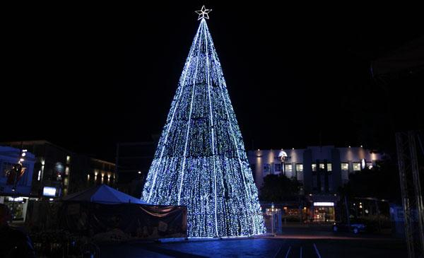 Light on: Hamilton's Garden Place looks magical with the Christmas tree lighting it up.