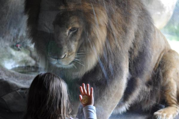 Sofia and the lion