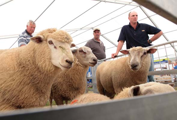 Southern Field Days at Waimumu 2012.