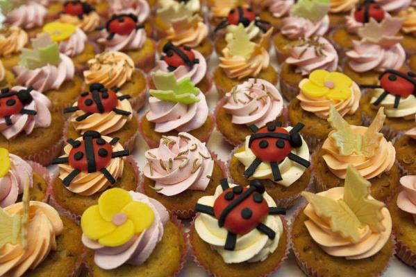 Cupcakes made of insects are displayed at the University of Wageningen.