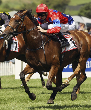 WAIKATO-BOUND: Gr I Rosehill Guineas winner Jimmy Choux (Jonathan Riddell) will begin his stud career at Matamata's Rich Hill Stud later this year.