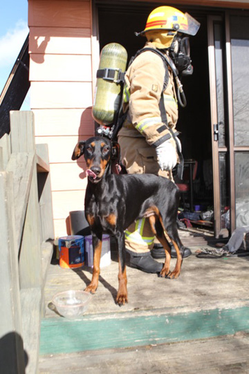 Two dogs have been rescued from the flames and a vet has been called to the scene to examine them.