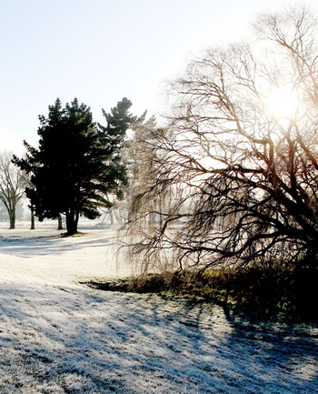 Frosty morning in Christchurch, 17 June 2012