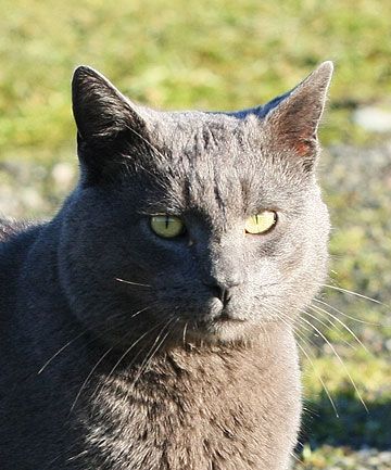 RESCUER: The cat that is being credited with alerting homeowner Dawn Bennie.