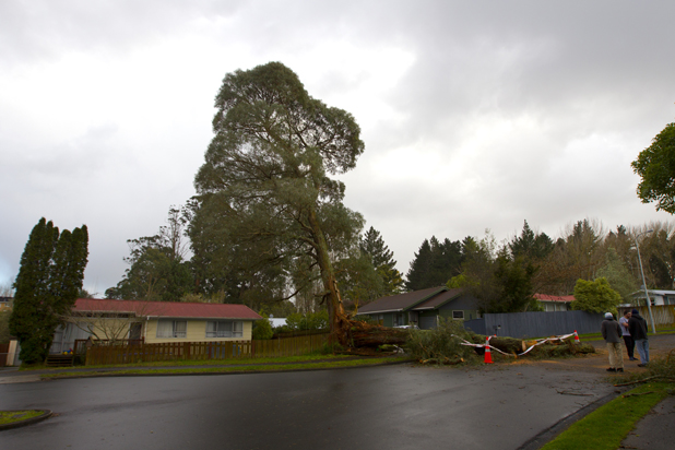 Last night's wild weather saw a tree split in half, with one half collapsing on the road of their cul-der-sac street Manor Pl.