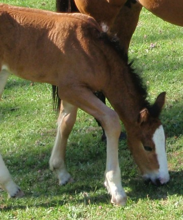 dolly and foal