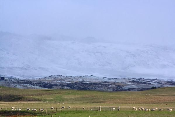 Snow falls in Ranfurly, Central Otago.