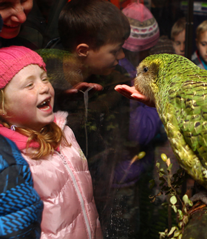BIRD'S EYE VIEW: Conservation Department ranger Alisha Sherriff hand feeds Sirocco the kakapo to the delight of Hora Hora Primary School teacher Joanne Synge and students Maia Johannas, six, and Emanuele Zanoli, 12.