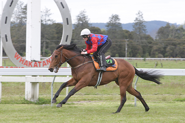 SI, SI: Catalonia (Matthew Cameron) scored a decisive trials win at Te Teko yesterday, his second in as many appearances.