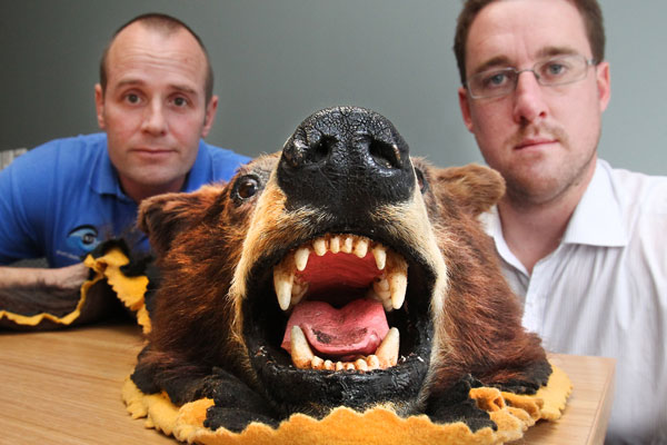 Customs Investigator Stu Williamson (left) and DOC Investigator Dylan Swain with a brown bear head and pelt from North America which was seized by customs.