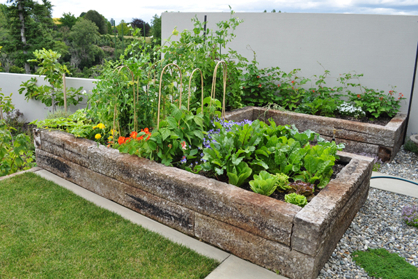Veggie patch with panache for Small garden designs nz