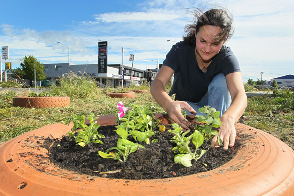 Hannah Trent from the Student Volunteer Army gives Rotarians a hand planting thousands of flowers across empty sites in the city. This site on the corner of Colombo and Brougham Streets.