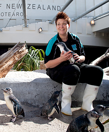 Penguin keeper Becs Cuthbert with rescued penguins