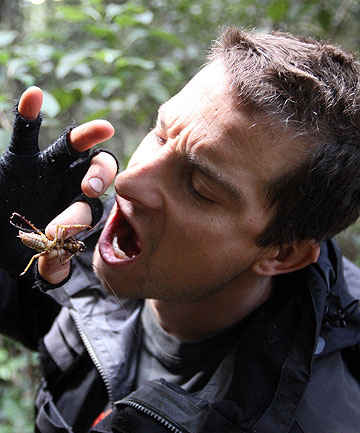 World-renowned adventurer Bear Grylls eats New Zealand's scariest bug - the weta.