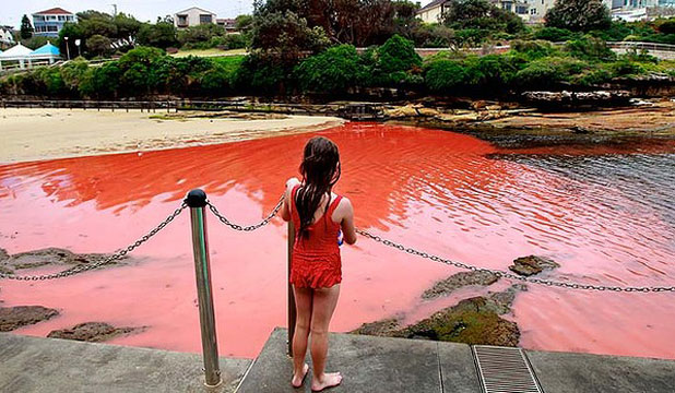 IN BLOOM: A girl inspects the water at Clovelly Beach in Sydney.