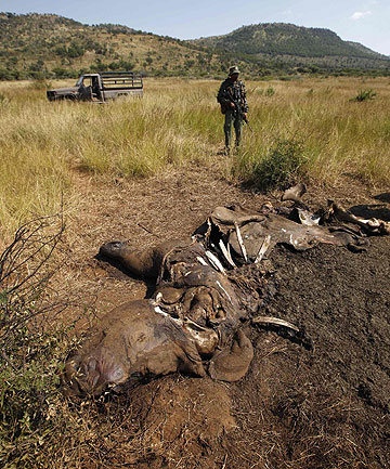 BRUTAL TRADE: Members of the Pilanesberg National Park Anti-Poaching Unit stand guard as conservationists and police investigate the scene of a rhino poaching incident in April this year.
