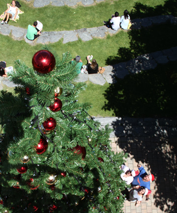 Queenstown's new Christmas tree