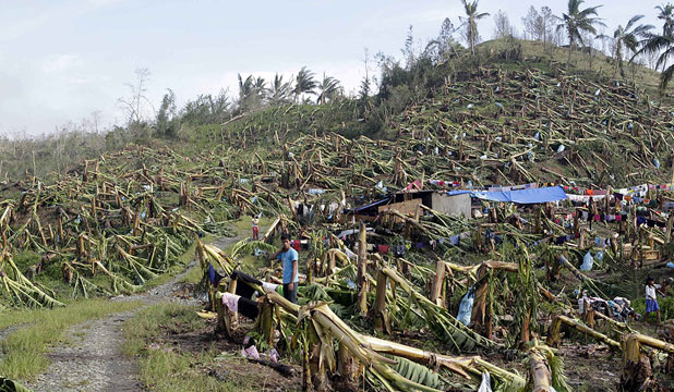 LAID WASTE: A man stands near makeshift tents surrounded by a destroyed banana plantation in New Bataan in southern Philippines.