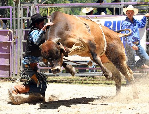 CLOSE CALL: Cameron Gould, of Wellsford, is about to bear the brunt of a bull.