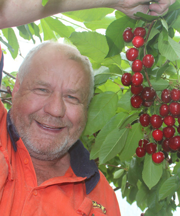 Cherries in Invercargill