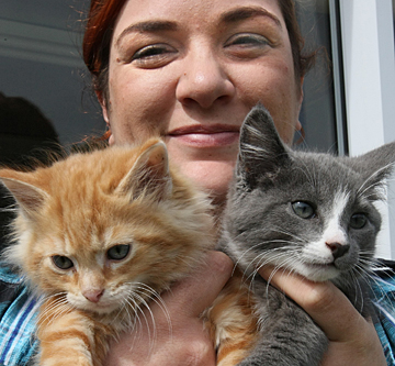 Kittens at the SPCA in Invercargill