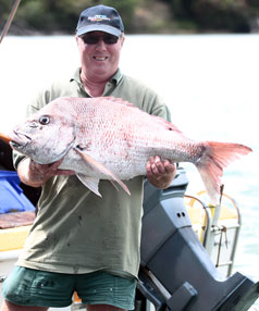 snapper stand
