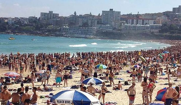Bondi Beach shark scare